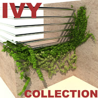 ivy modelled 3d model