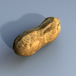 peanut nut 3d model