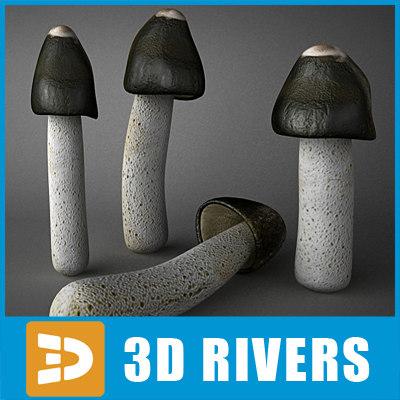 max ravenel stinkhorn mushroom
