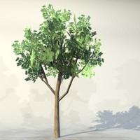 Tree_037.zip