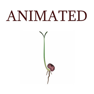 growing seed animation 3d model