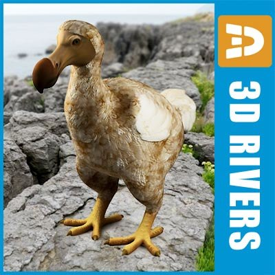 3d dodo bird