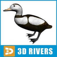 3ds max labrador duck