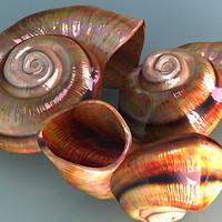 spiral beach shells