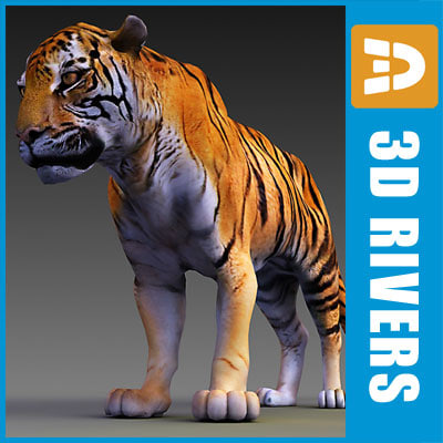 endangered siberian tiger amur 3d model