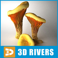 3d chanterelle mushrooms model
