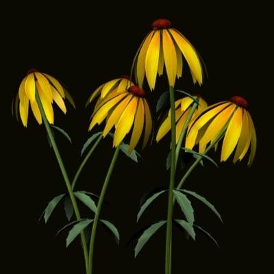 3d model cornflower corn flower
