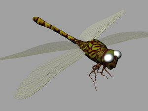 free dragonfly 3d model