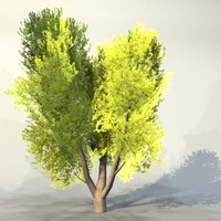 Tree_053.zip