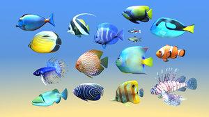 16 fish tropical 3d model