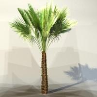 palm_013.zip
