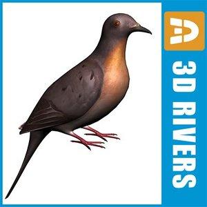 passenger pigeon bird 3d max