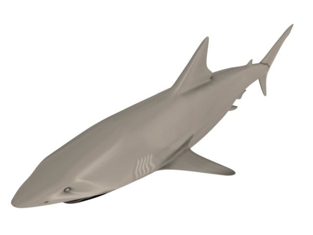 great white shark 3d obj