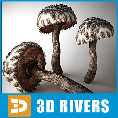 3d strobilomyces floccopus mushrooms