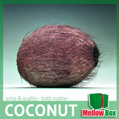 coco nut 3d model