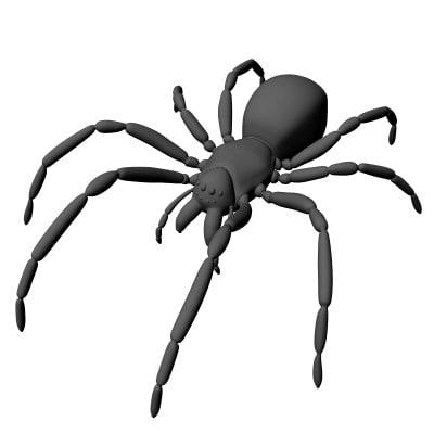 spider arachnid obj