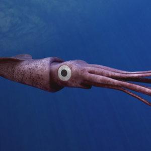 3dsmax squid