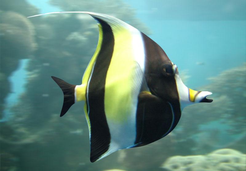 fish 02 max