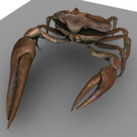 3d fiddler crab model