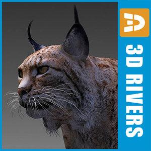 endangered animals iberian lynx 3d model