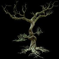 Secular Tree
