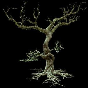 secular tree 3d model