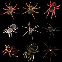 spider set 3d model