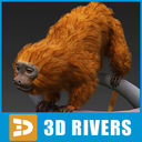 Golden Lion Tamarin 3D models