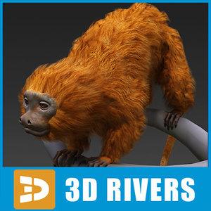 maya golden lion tamarin monkey