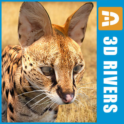 serval cats 3ds