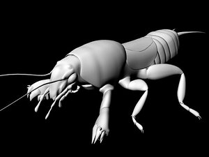 mole cricket ma