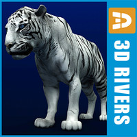 White tiger by 3DRivers