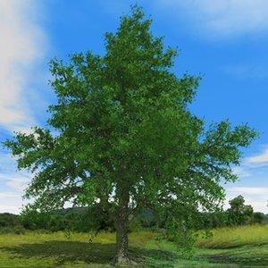 free oak season 3d model