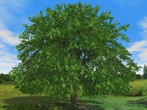 free c4d mode 3d-trees ash