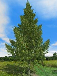 3d-trees fir c4d free