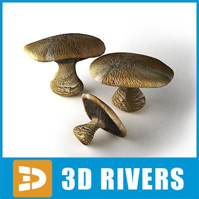 blewitt mushroom max