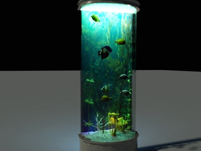 3d model aquarium tropical fish