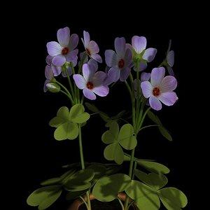 flower pot oxalis 3ds