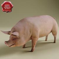 3d model of pig modelled