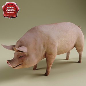 3d model of pig modelled