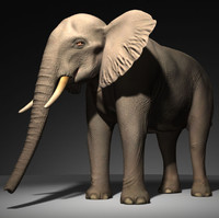 3d model of african elephant