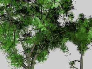 trees beech oak - 3d model