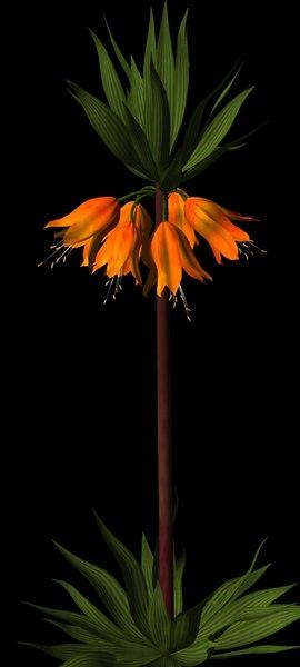 3d ma flower crown imperial fritillaria