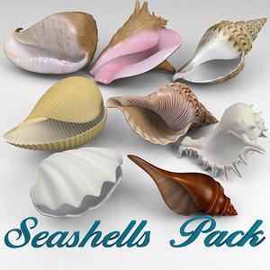3d model seashell shell sea