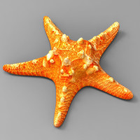3d model starfish fish