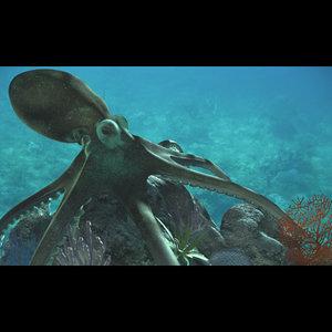 3d model octopus corals rocks