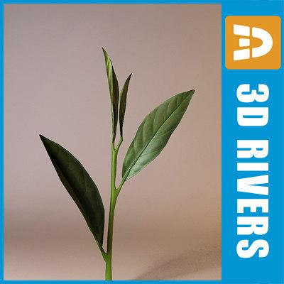tea leaves leaf 3d model