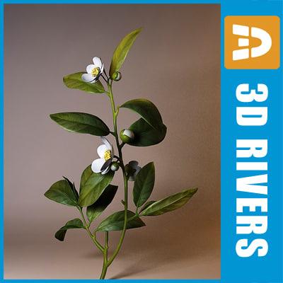 3d tea plant