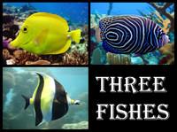 maya 3 fishes