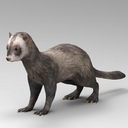 Mongoose 3D models